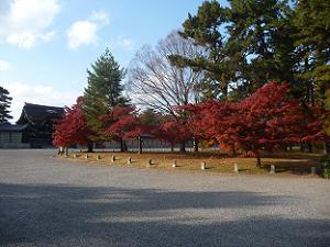 御所の門と紅葉