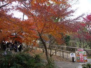 茶店付近の紅葉