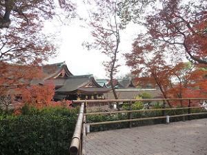 天狗山から見る本殿と紅葉