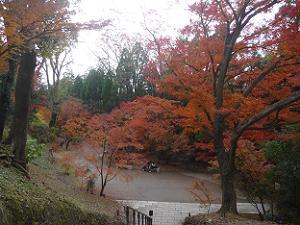 石段上から見下ろす紅葉