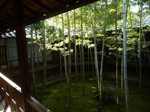 竹林の坪庭