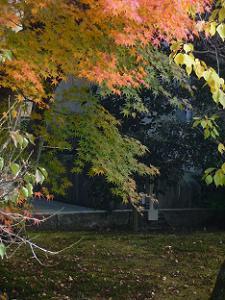 光琳曲水の庭の紅葉