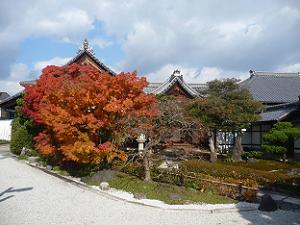慈雲院の紅葉