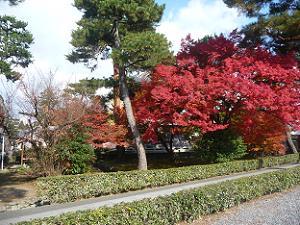 鐘楼付近の紅葉