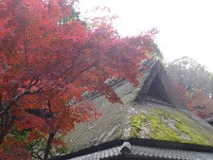 茅葺屋根と紅葉