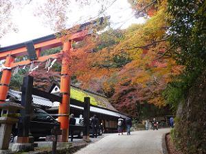 愛宕神社の鳥居と紅葉