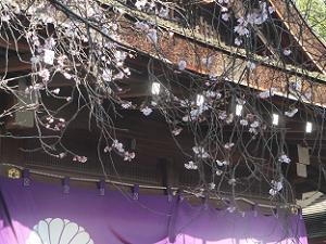 社務所近くの十月桜