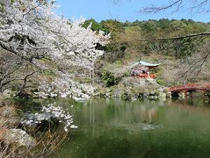 弁天池と桜