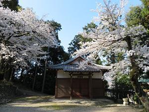神器殿と桜