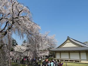霊宝館と満開の桜