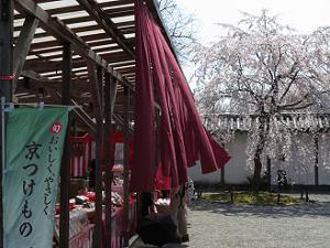 京つけもの屋さんとクローン桜