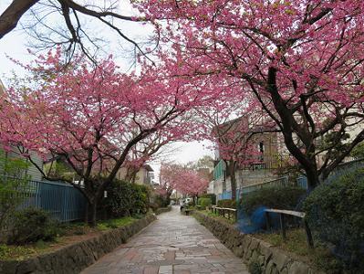 河津桜の屋根