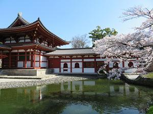 ソメイヨシノと池と鳳凰堂