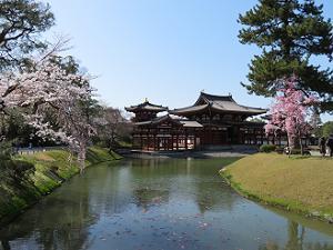 桜と鳳凰堂と青空