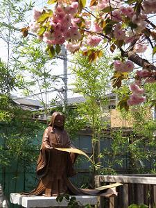 紫式部と普賢象桜