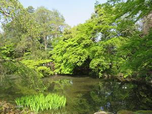 近衛池と新緑