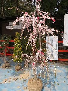 源平枝垂れ桃