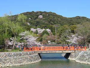 山に咲く桜
