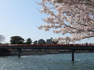 ソメイヨシノと朝霧橋