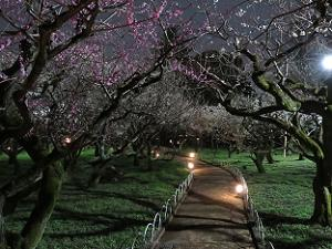 手持ち夜景モードで撮影した夜の梅苑