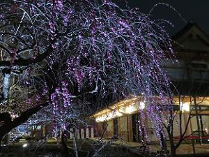 枝垂れ梅の枝先まではっきりと写る