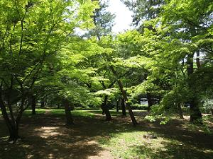 木々の青葉