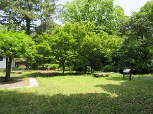 芝生と新緑