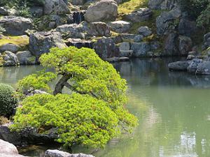 植木と石組