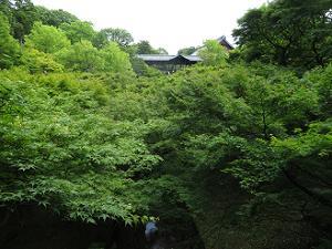 臥雲橋から見る洗玉澗の新緑