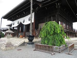 本堂と三春滝桜