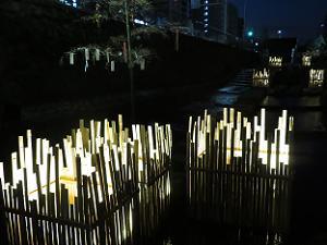 竹に囲まれた灯り