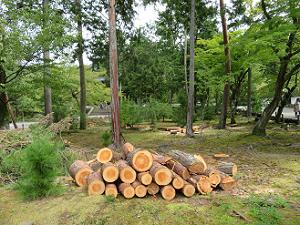 伐られた木