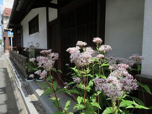 新島襄の旧邸とフジバカマ