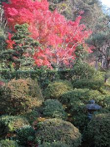 書院東側の庭園の紅葉