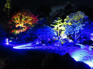 ライトアップされた枯山水庭園