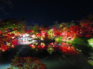 ライトアップされた放生池の紅葉