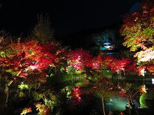 放生池の紅葉と多宝塔
