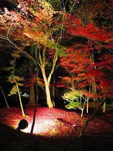 照明に照らされた散り紅葉