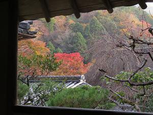 茶徳亭から見る紅葉
