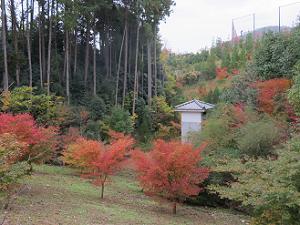 白馬池近くの紅葉