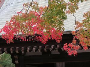 勅使門と紅葉
