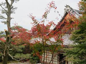見下ろす紅葉と本堂