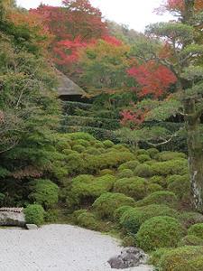 庭園から見上げる紅葉