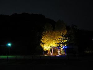 暗闇に光る高良神社