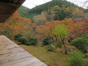 南縁から見る紅葉