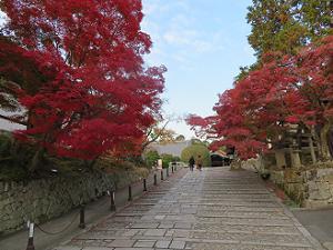 蓮池付近の紅葉