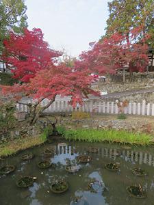 蓮池と紅葉