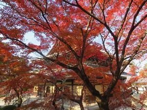 紅葉と法堂