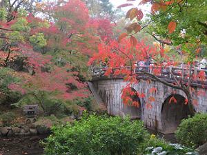 円通橋と紅葉