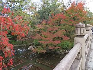 円通橋から見た紅葉